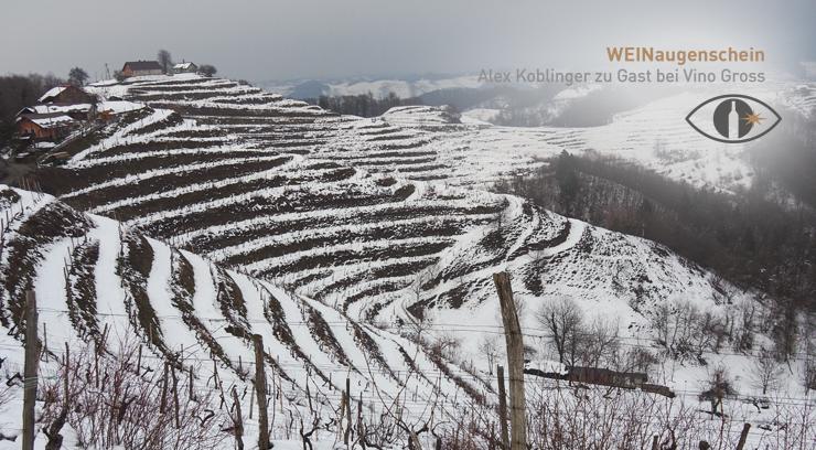 Header Weingärten der Vino Gross in Gorca_740x408