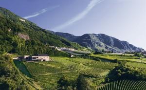 Weingut Pfitscher mit Blick auf Weinberge und Kellerei