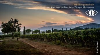 Weingärten im wunderschönen Maremma